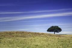 Lonesome Cork Tree (Rui Pedro Vieira) Tags: travel tree portugal landscape europa day cork paisagem viagem alentejo plain rvore plancie corktree sobreiro ourique ruby3 baixoalentejo garvo mygearandme mygearandmepremium mygearandmebronze mygearandmesilver ruby10 ruby20 pwpartlycloudy estradanacionaln123 treesecl