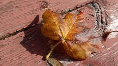 Fall Colours (Brian Pressey) Tags: ontario canada fall fallcolors milton fallcolours hx300 sonydschx300