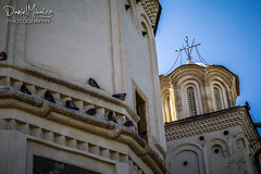 Photo from WWPW 2013 (Daniel Mihai) Tags: building church architecture pigeons religion romania christianity bucharest wwpw wwpw13
