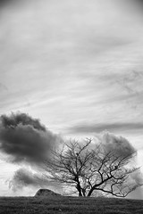 one tree hill (lynn.h.armstrong) Tags: camera autumn sky bw white ontario canada black tree art fall monochrome grass rock clouds lens photography one photo aperture nikon long flickr afternoon photographer wordpress branches south hill wb blogger images lynn livejournal h parkway getty nik nikkor armstrong stormont facebook sault ingleside twitter tumb