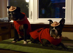 Mounties (ndh) Tags: dogs halloween animals spike wally