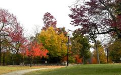 11_02_13_ Doling Park (Rottlady) Tags: fallcolors autumncolors springfieldmissouri dolingpark theozarks rottlady