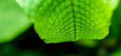 Macro Texture (Ruanon) Tags: light summer plants plant macro green eye fall texture nature leaves closeup canon bug outside rebel 50mm leaf pattern view natural patterns cell greenhouse scales biltmore f18 fiber foilage t3i