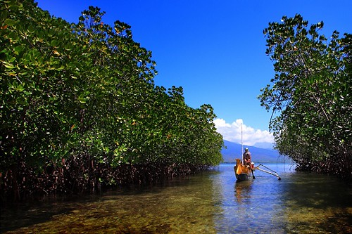 Hutan-Mangrove-di-Gili-Sulat-Lombok-Timur-1