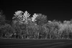 IR 950nm #1 (Patrice StG) Tags: trees winter snow ir pentax hiver arbres qubec infrared neige infrarouge 950nm k20d