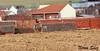 Liebre (Amiga ilusión.) Tags: naturaleza pueblo campo animales velocidad campeonato zamora carreras caza castillayleón afición galgos camuflaje competición liebres