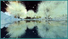 Blanche douceur ... (Tim Deschanel) Tags: life winter snow tree landscape happy tim mood hiver sl reflet reflect second neige paysage arbre deschanel happymood