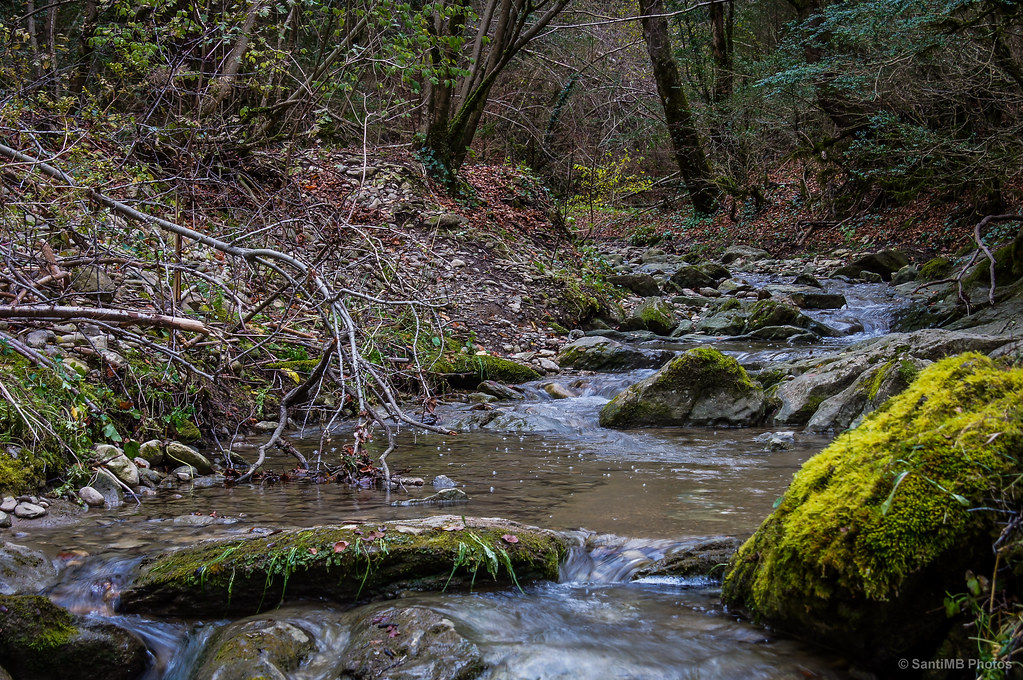 Agua del bosque