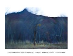 LANDSCAPEINMOTION2015-002 (Edwin Loyola) Tags: winter abstract nature landscape seasons icm intentionalcameramovement landscapeinmotion edwinsloyola edwinloyola edwinsloyolaphotography