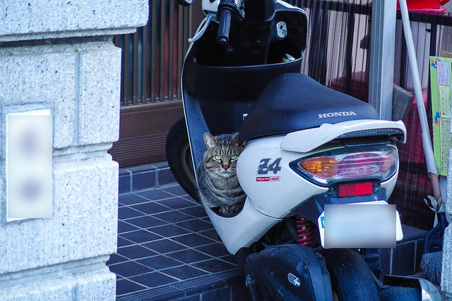 Today's Cat@2014-03-18