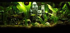 051.365 Aquarium (riaskiff) Tags: 365the2017edition 3652017 day51365 20feb17 aquarium fishtank planted castle riaskiff