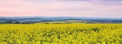 yellow fields (Stuart Robinson photography.) Tags: landscape wide sharp views dorset vista blinkagain