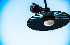 If I was a streetlamp with bird (BraqueLee) Tags: abstract lamps concept stree tlamps