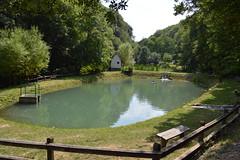 2013_Mecsek_ 433 (emzepe) Tags: hungary ungarn hongrie 2013 nyár július kirándulás egyházközösségi gyermektábor tábor mecsek mecseki hegység péntek pénteki túra hegymászás óbánya pisztrángos tó halastó trout forellen truite pond lake