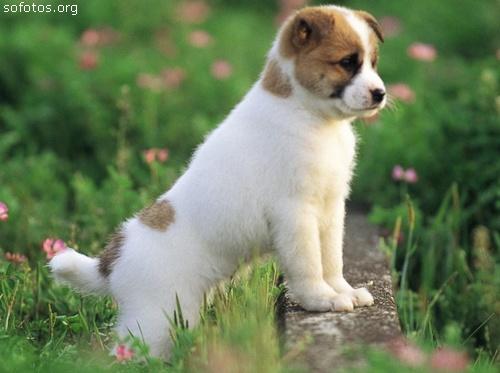 Filhotes de cachorros 11