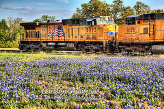 Train Engines in the Bluebonnets