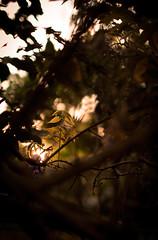 Last light (rhys.l) Tags: sunset 35l