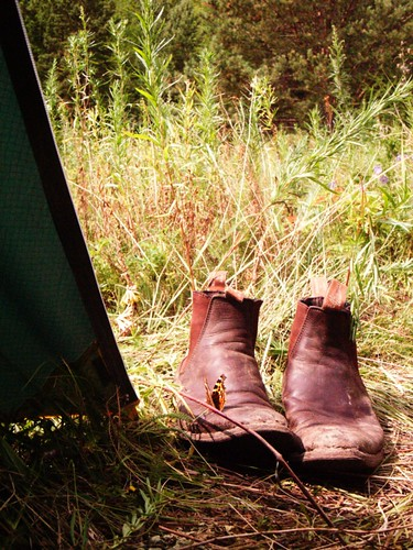 field forest butterfly shoes russia sunny tent siberia wildflowers lakebaikal gbt greatbaikaltrail rmwilliamsboots pribaikalskynationalpark