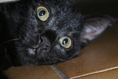 Mimì (Luc1659) Tags: cat nero gatta ruby3 micia1 mygearandme ruby10