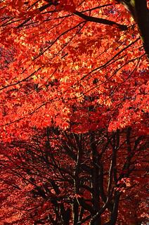 fall foliage on Cambridge Street