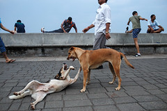 Morning Activities - Mumbai, India (Maciej Dakowicz) Tags: morning dog india animal sport exercise promenade bombay activity mumbai fit marinedrive exercising narimanpoint seapromenade