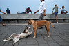 Morning Activities - Mumbai, India (Maciej Dakowicz) Tags: morning dog india animal sport exercise promenade bombay activity mumbai fit marinedrive exercising narimanpoint seapromenade