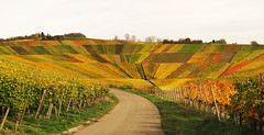 Natural Amphitheater in the Autumn Vineyard (Habub3) Tags: travel autumn holiday fall nature canon germany landscape deutschland vineyard search reisen europa europe stitch natural urlaub herbst natur powershot amphitheater landschaft vacance weinberg g12 serach 2013 weinstadt habub3