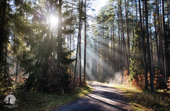 Morning in the woods (warmianaturalnie) Tags: road wood trees nature forest sunrise landscape poland sunrays warmia