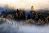Morgennebel im Herbst (mikiitaly) Tags: italy nebel südtirol altoadige autofocus wipptal lärchen bestcapturesaoi coth5 sailsevenseas elitegalleryaoi ruby10 ruby15 ruby20 rubyfrontpage