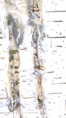 Silver Birch (Dawn Brimicombe) Tags: tree silver painting wax birch encaustic pigment