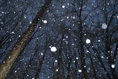 SNOW 75 (Nathan_Arrington) Tags: county winter white mist snow cold ice water nova fog night clouds snowflakes virginia lowlight seasonal fluffy freeze snowball fairfax snowfall flakes particles reston precipitation crystalline nathanarringtonphotography