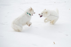 """Chase & Jag In Action • <a style=""""font-size:0.8em;"""" href=""""http://www.flickr.com/photos/96196263@N07/11384579824/"""" target=""""_blank"""">View on Flickr</a>"""