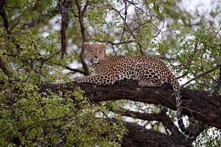 Botswana Okavango Delta Photo Safari 40