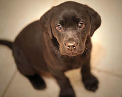 meet marley... (Dawn Porter) Tags: