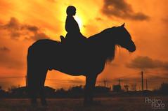 Ftima - Cowgirl session (Pedro Floro) Tags: portrait horse field contraluz caballo atardecer spain model cowboy retrato modelo arab campo silueta cowgirl ftima hpica yegua rabe vaquera
