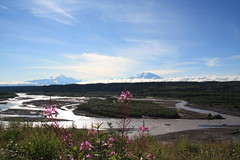 Tok Cutoff View- Copper River and Wrangell Mts (Wrangell-St. Elias National Park) Tags: mountain alaska river nationalpark nps drum sanford wrangell fireweed mtdrum copperriver wrangellstelias wrangellmountains wrangellsteliasnationalpark