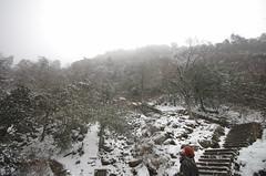 Mt_Huangshan5