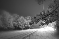 winter distortion (fitzbike1) Tags: trees winter snow streets home nature night nikon storms lockport