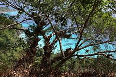 E10A2331 (yasnova) Tags: island see snorkling similan tailand