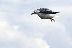 JONATHAN LIVINGSTON SEAGULL – JUAN SALVADOR GAVIOTA (ipomar47) Tags: clouds juan pentax jonathan seagull bach richard nubes salvador gaviota livingston d20d