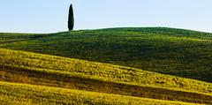 Yellow and Green (luigig75) Tags: italy canon italia tuscany montalcino pienza toscana valdorcia 70300mm tamron 70 vc rollinghills usd colline 70300 cipresso sanquiricodorcia f456 70d senesi tamronsp70300mmf456divcusd