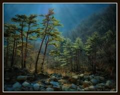 Mountain Pines, Korea (edenseekr) Tags: blue trees mountains pine korean riverbed stony tall oilpaintingeffect digitallypainted