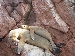 Momma Sea Lion and pup.