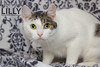 Lilly (Oliver Pietern) Tags: cat canon germany deutschland kitty domestic lilly nrw katze paws shelter suchen oberhausen tierheim homeles tierschutz katzenhilfe