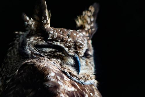 Thumbnail from World of Birds
