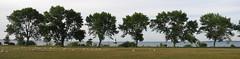 IMG_1271Pn Ludington Park shoreline (jgagnon63@yahoo.com) Tags: park trees summer panorama usa seagulls waterfront michigan august lakemichigan upperpeninsula escanaba ludingtonpark canons110 deltacountymi shorelinetrees escanabashoreline escanabaparks