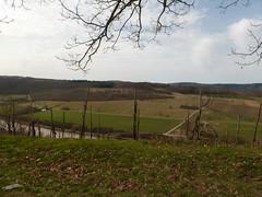P1030144 (Unterwegs im Trierer Land) Tags: kanzem wiltingen saarbogen