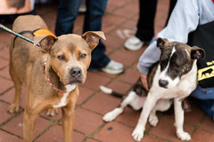 _DSC5563.jpg (Knight725) Tags: dog pennslanding d800 2470f28 adoptionevent