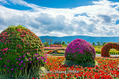 Harry_09966,,,,,,,,,,,,, (HarryTaiwan) Tags: taiwan    d800               harryhuang   hgf78354ms35hinetnet