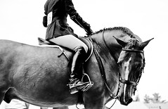 graceful glance (Jennifer MacNeill) Tags: horses blackandwhite bw horse english blackwhite boots riding devon hunter horseshow rider equestrian equine bridle devonhorseshow jennifermacneilltraylor ldlnoir jennifermacneill jennifermacneillphotography